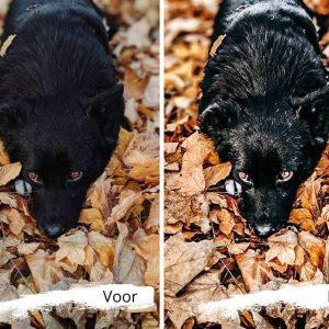 mooie herfstfoto's van jouw hond dankzij de digitale fotopresens van lightroom