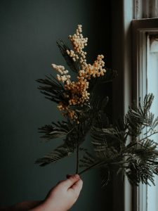 faceless person demonstrating plant branch with blooming flowers at home